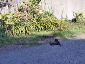 いすみ市 猫