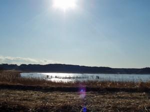 輝く印旛沼
